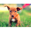 BUY PHOTOS FREE ANIMAL PICTURES | PHOTOS COCO DOG PORTRAIT