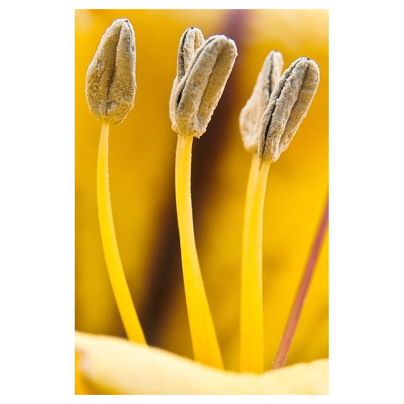 FREE BUY IMAGES | YELLOW FLOWER
