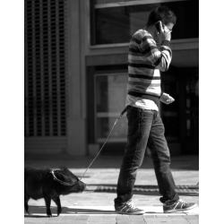 BUY IMAGES FREE BLACK AND WHITE   PET PIG