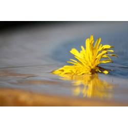 FREE BUY PICTURES | WET FLOWER | PHOTOS OF FLOWERS