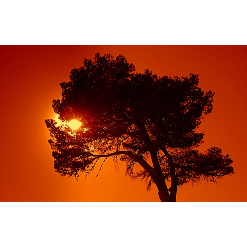 Buy Images | Silhouette at sunset