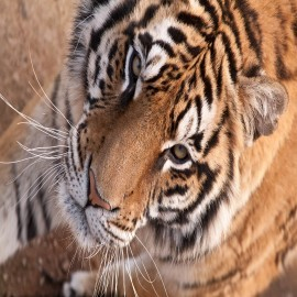 COMPRAR IMAGENES LIBRES FOTOS DE ANIMALES